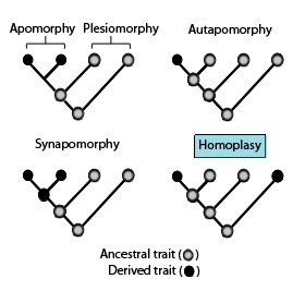 Palaeos Evolution Glossary