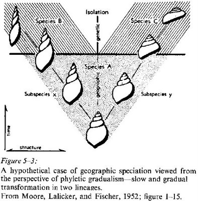 human evolution tree diagram