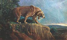 Smilodon fatalis - illustration by Charles R Knight - Wikipedia