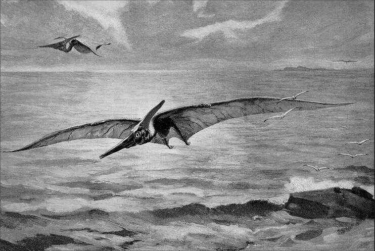 [Image: nh_pteranodon.jpg]