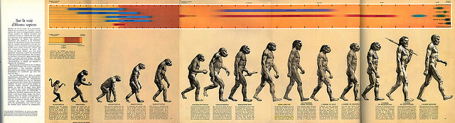 Early Man Evolution Early Man Volume More