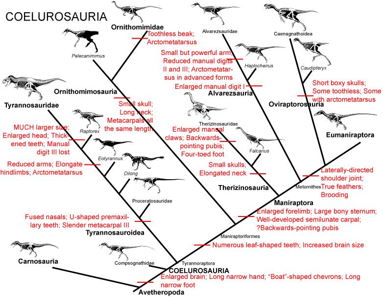 104Coelurosauria.png