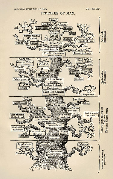 Palaeos Systematics The Phylogenetic Tree Haeckels Trees