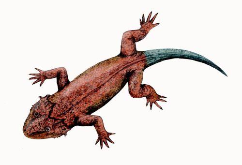Palaeos Vertebrates Anapsida: Lanthanosuchoidea