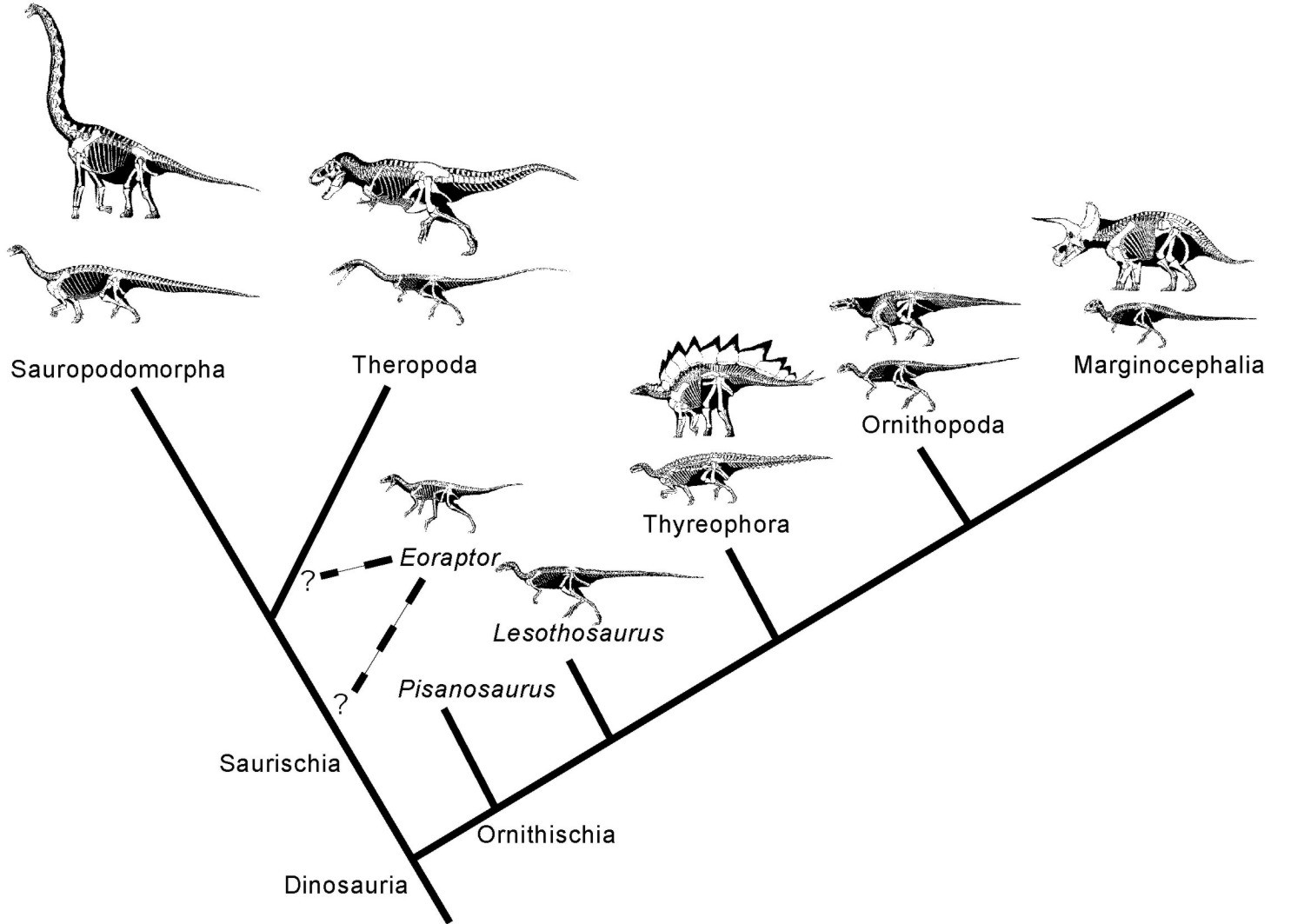 an overview of the relation between the birds and dinosaurs the archeaopteryx Archaeopteryx, generally accepted as being the oldest known bird, is an important link between birds and other coelurosaurs that has helped to illuminate the evolutionary history (phylogeny) of the group it is now widely held to be the ancestor of all living birds this is a common misconception.