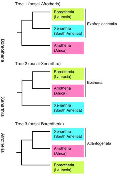 Xenarthra Phylogeny Palaeos Vertebr...
