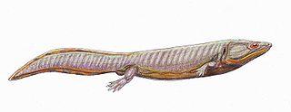 http://palaeos.com/vertebrates/temnospondyli/images/Dvin_egreg1DB.jpg